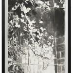 poison, Tusche auf Japanpapier, 38x68,5 cm, 2018
