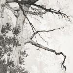 Detailansicht the path